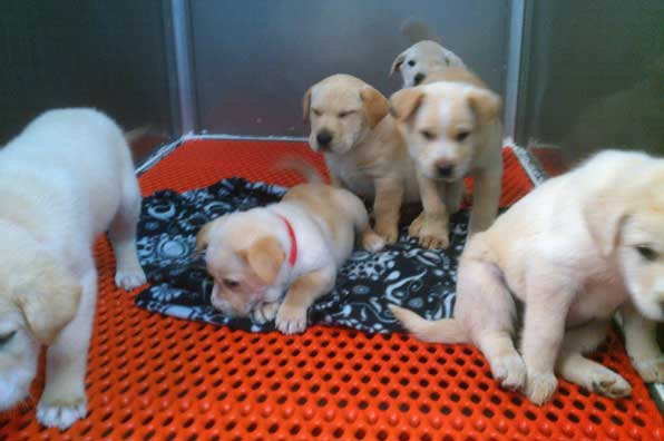 available-puppies